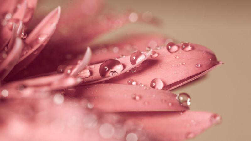 flower, drop, 4k (horizontal)