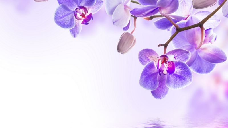orchid, flower, 4k (horizontal)