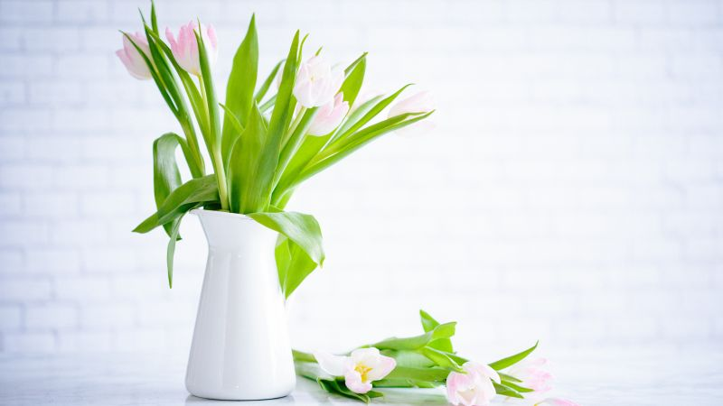 flowers, tulips, vase, 5k (horizontal)
