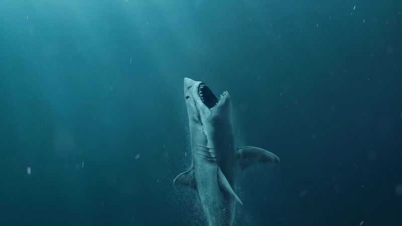 The Meg, shark, 4k (horizontal)