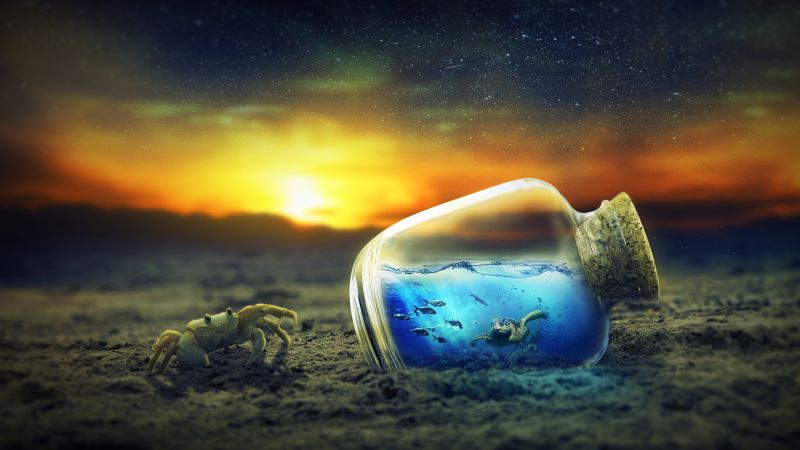Bottle, Crab, Turtle, 4K (horizontal)