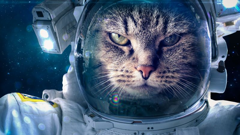 Astronaut, Funny animals, Cat, 5K (horizontal)