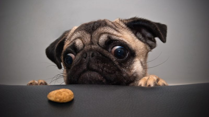 Dog, funny animals, cookie, 4K (horizontal)