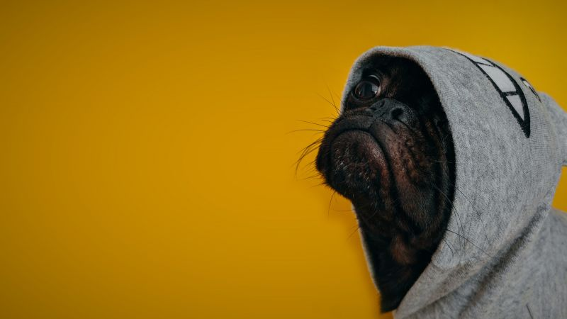 Dog, funny animals, 4K (horizontal)