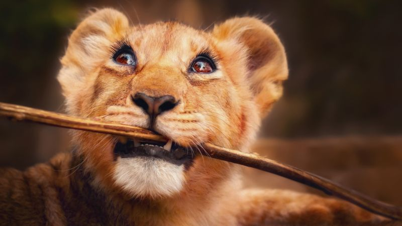 Lion, funny animals, 4K (horizontal)