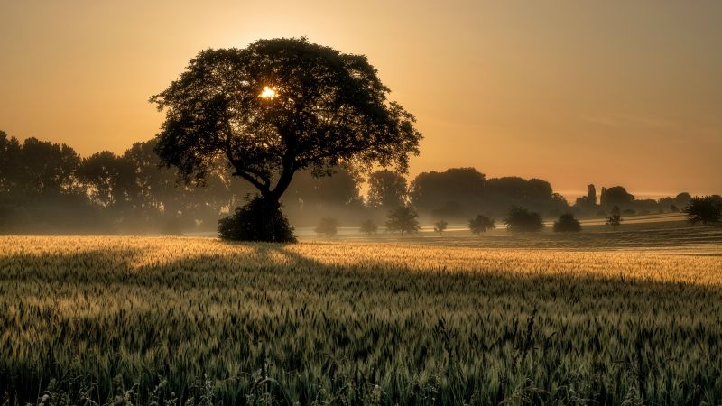 sunset, tree, field, 4K (horizontal)