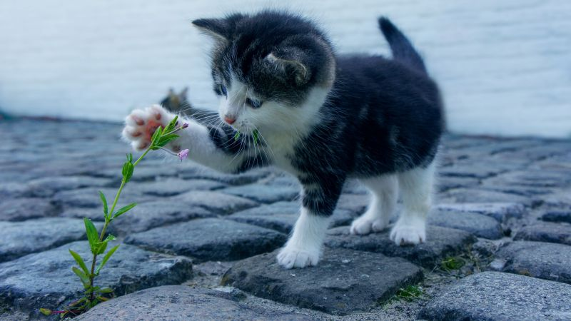 Kitten, funny animals, flower, 4K (horizontal)