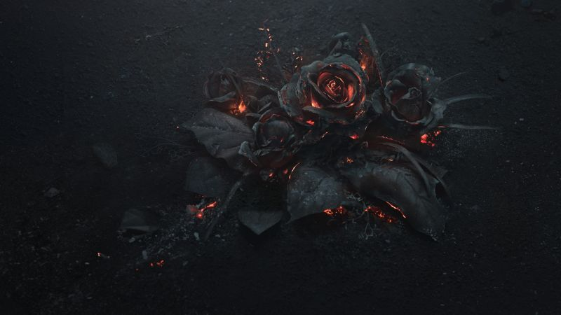 rose, dark, 5K (horizontal)