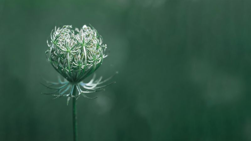 flower, green, macro, 10K (horizontal)
