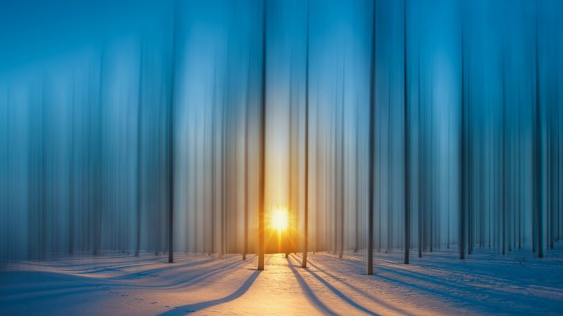 forest, snow, sunset, HD (horizontal)