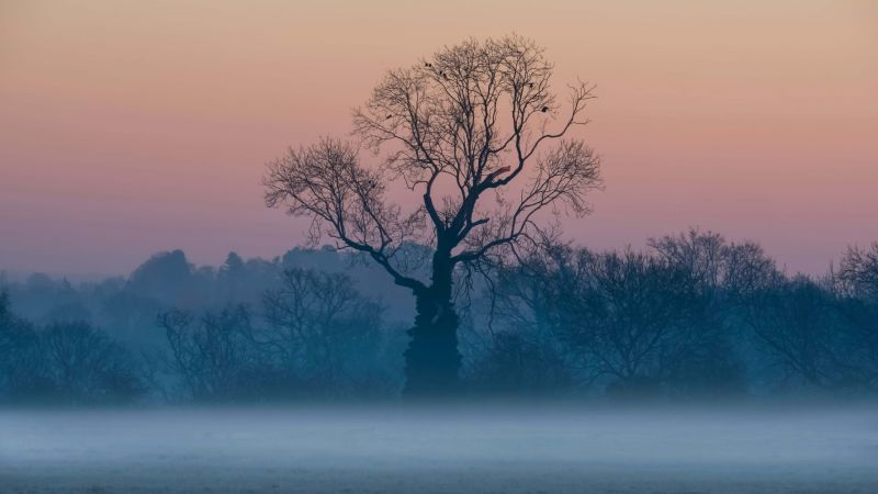 tree, sunrise, fog, 5K (horizontal)