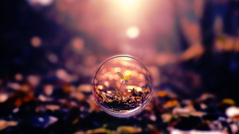sphere, 4k, HD wallpaper, background, sunset, transparent, plant (horizontal)