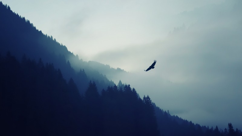 forest, 5k, 4k wallpaper, fog, eagle, landscape, wallpaper (horizontal)