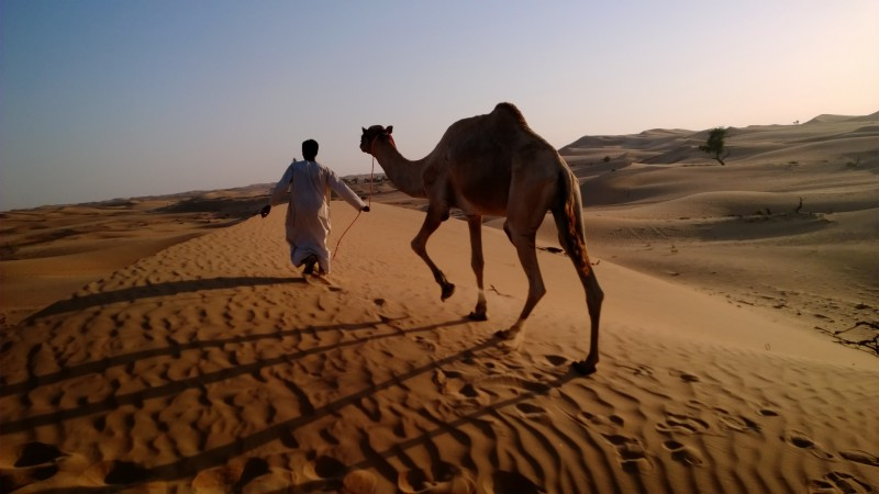 camel in desert, arabian caravan, Arabian Nights Village, Nokia Lumia test, Abu Dhabi tourism (horizontal)