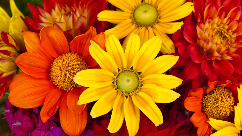 Gerbera, 5k, 4k wallpaper, autumn, flower, colorful, Flower bouquet (horizontal)