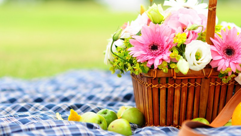 Gerbera, 4k, HD wallpaper, Flowers, picnic, bascet, apple (horizontal)