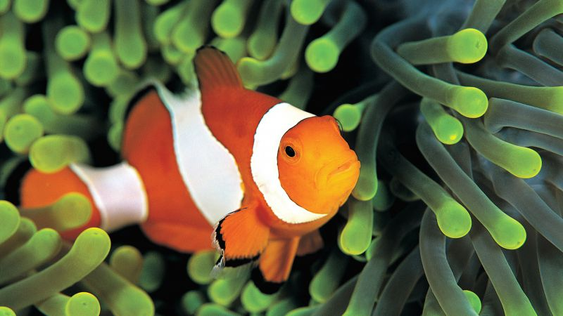 clownfish, underwater, Best Diving Sites (horizontal)