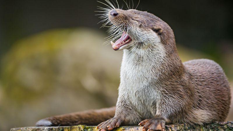 Wallpaper Otter Cute Animals Funny Animals 4499
