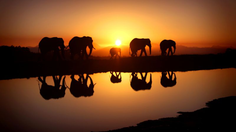 Elephant, sunset, water (horizontal)