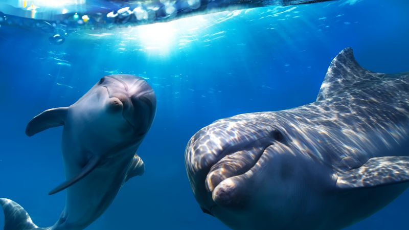 Dolphin, underwater, Best Diving Sites (horizontal) ...