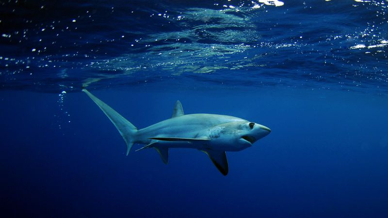 Shark, underwater, Best Diving Sites (horizontal)