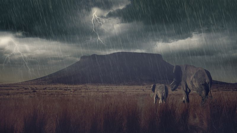 Elephant, mountains, storm, meadow (horizontal)
