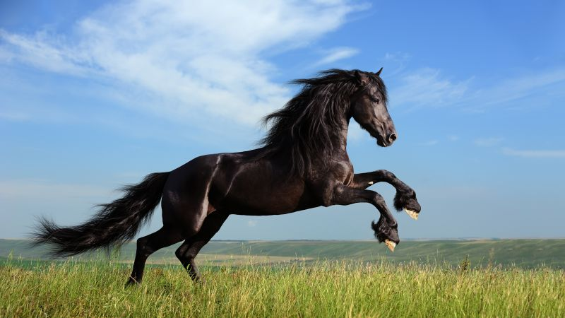 Horse, gallop, meadow, sky (horizontal)
