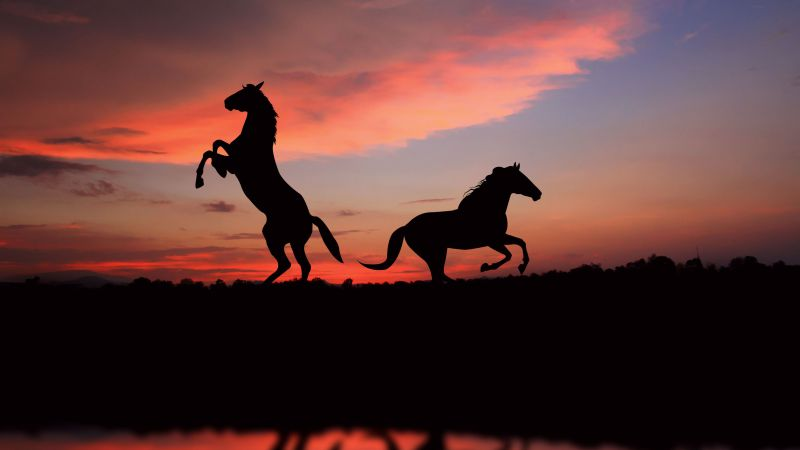 Horse, night, sunset, cute animals (horizontal)