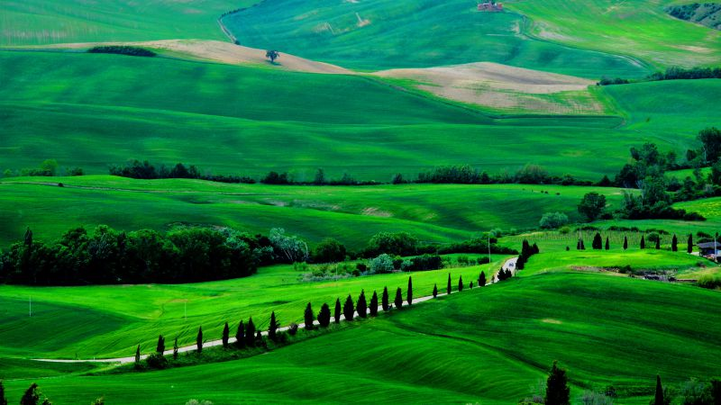 Tuscany, 4k, HD wallpaper, Italy, Meadows, hills, pines, trees (horizontal)