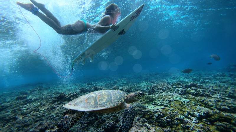 Surfing, girl, sea, underwater (horizontal)