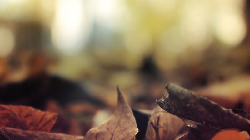 Leaves, 5k, 4k wallpaper, autumn, forest (horizontal)