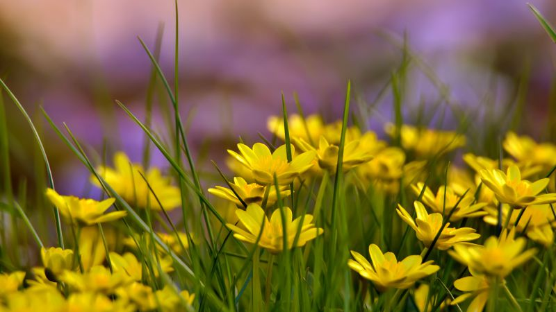 Flowers, 4k, HD wallpaper, green grass, nature (horizontal)