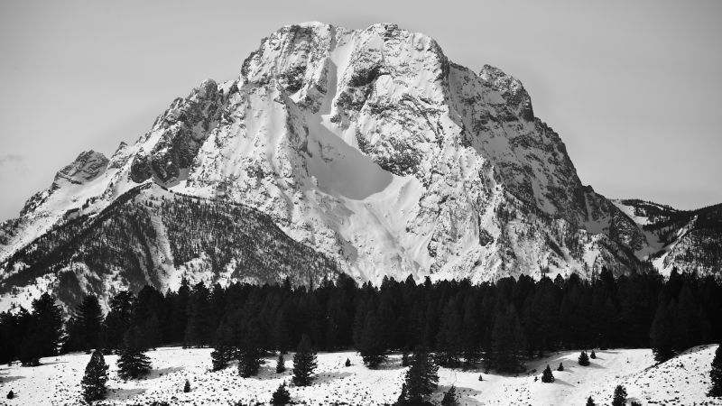 Mount Moran, 5k, 4k wallpaper, USA, Mountains, pines, snow (horizontal)