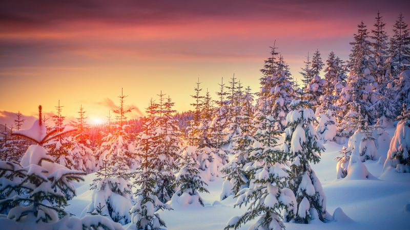 Pines, 5k, 4k wallpaper, 8k, snow, sunset, winter (horizontal)