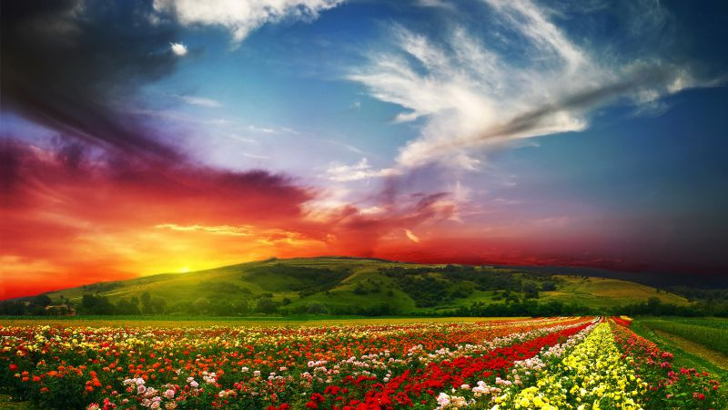 India, 5k, 4k wallpaper, Valley of Flowers, Meadows, roses, sunset, clouds (horizontal)