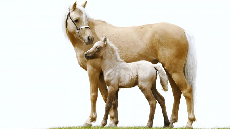 Horse, white, cute animals (horizontal)