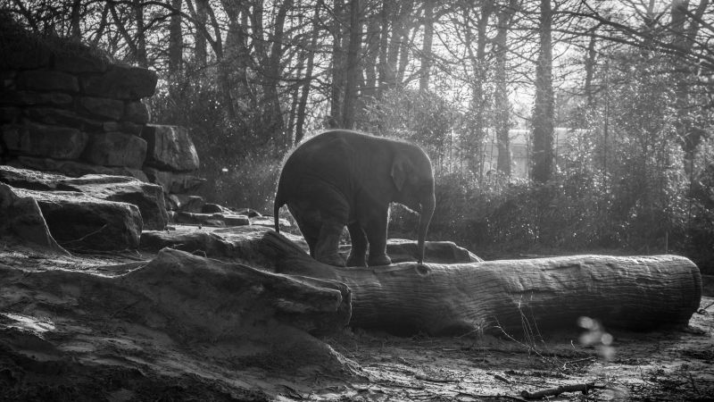 Elephant, forest, sunlight (horizontal)
