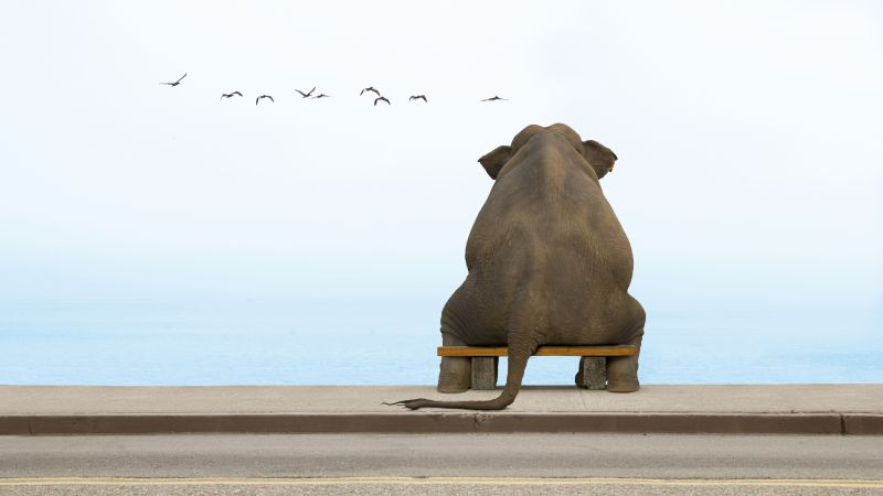 Elephant, sea, cute animals (horizontal)