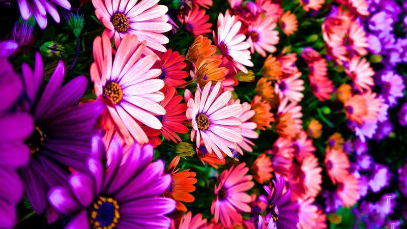 картинки на рабочий стол цветы самые № 517222 без смс