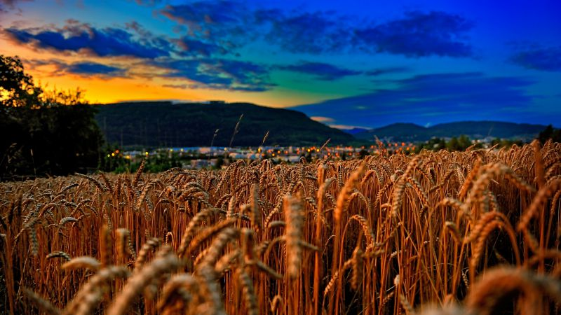 Wheat, 4k, 5k wallpaper, field, sunset, clouds, hills (horizontal)
