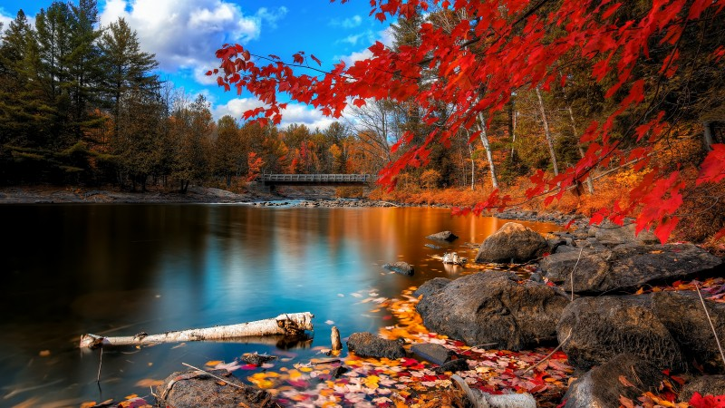 autumn forest, 4k, HD wallpaper, leaves, trees, lake, rocks, beach, bridge, sky, clouds (horizontal)
