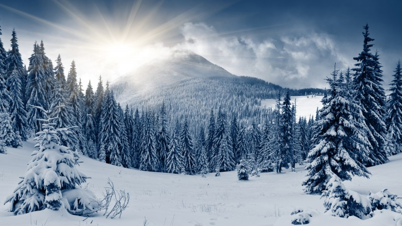 winter forest, 5k, 4k wallpaper, mountain, sun, snow, fir-trees (horizontal)