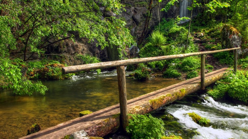 forest, 5k, 4k wallpaper, green, trees, plants, waterfall, bridge (horizontal)