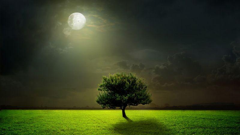trees night moon blotch - photo #28