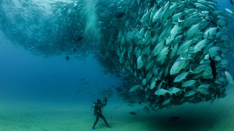 Cabo Pulmo National Park Mexico 5k 4k Wallpaper Diving Fish