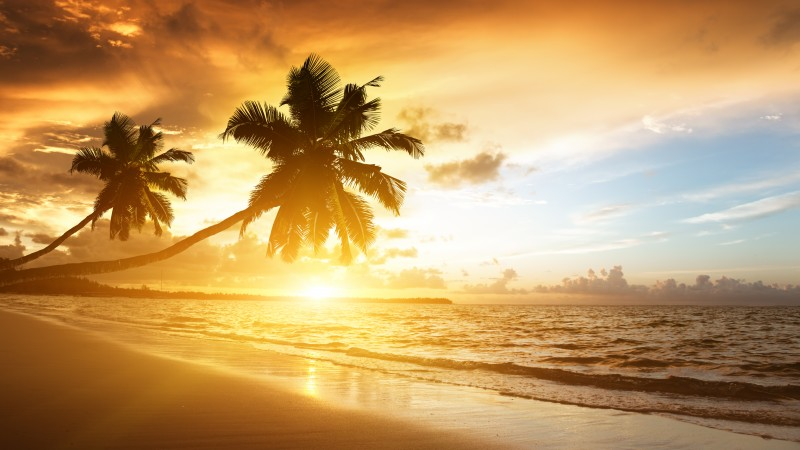 beach, 5k, 4k wallpaper, ocean, sunset, palm trees, vacation, journey (horizontal)