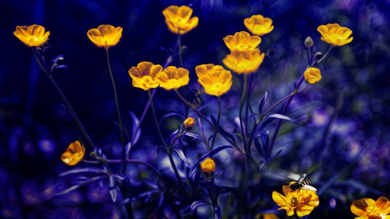 Buttercups, 4k, 5k wallpaper, flowers, yellow, purple (horizontal)