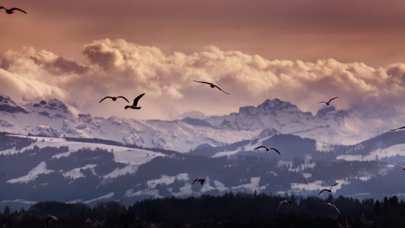 Switzerland, 5k, 4k wallpaper, 8k, Alps, mountains, seagulls, clouds (horizontal)