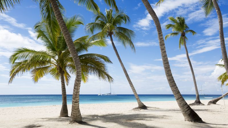Jamaika, 5k, 4k wallpaper, The Caribbean, beach, palms, sky, travel, tourism (horizontal)