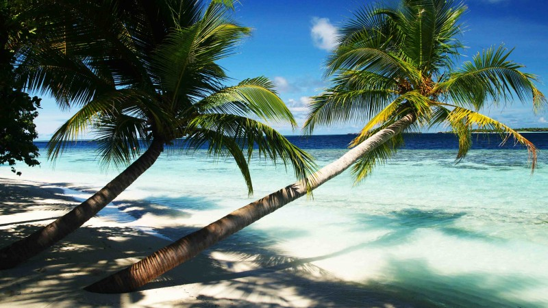 Maldives, 4k, 5k wallpaper, holidays, palms, paradise, vacation, travel, hotel, island, ocean, bungalow, beach, sky (horizontal)